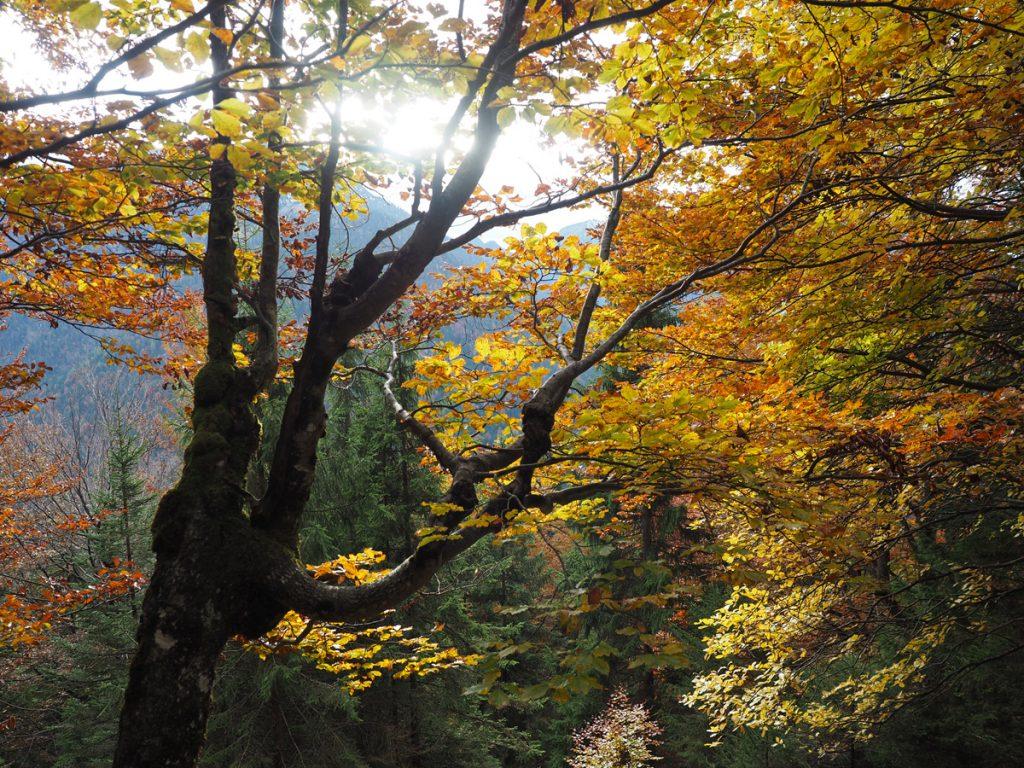 Demeljoch - Wald im Herbst