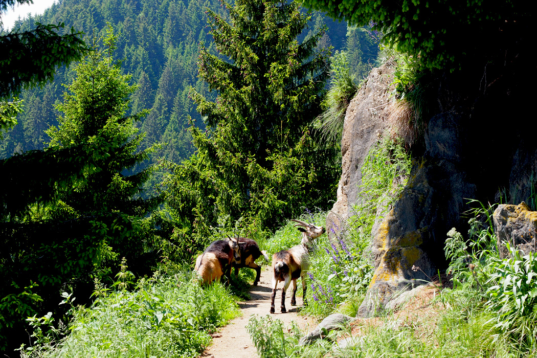 Meraner Höhenweg - Hüttenwanderung
