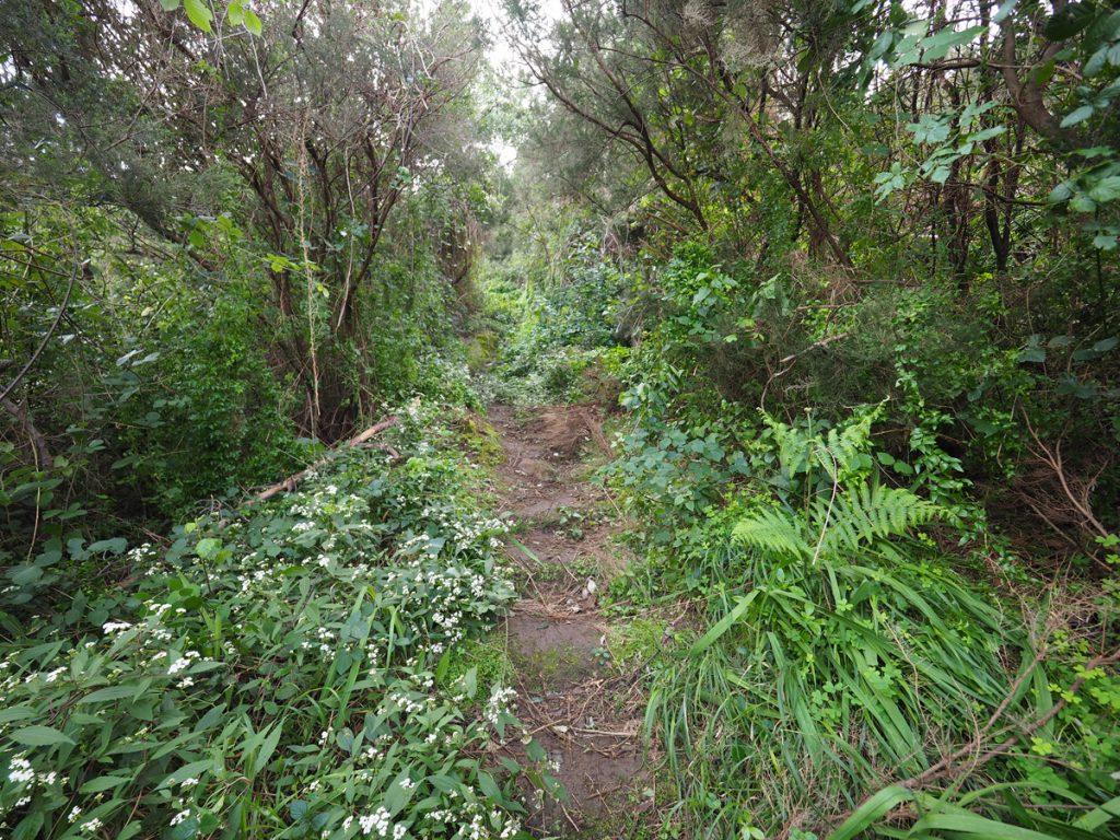 Madeira - Penha de Aguia Wald