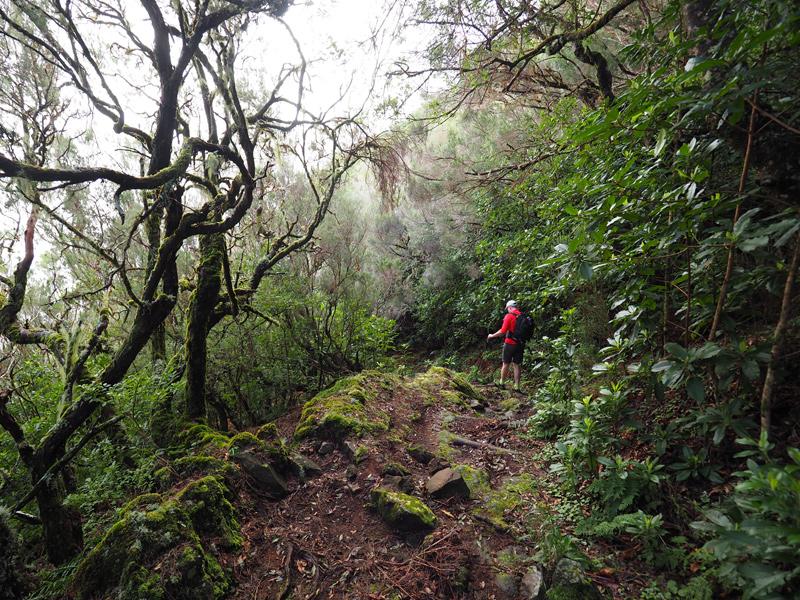 Madeira - Pico Ruivo Wandern