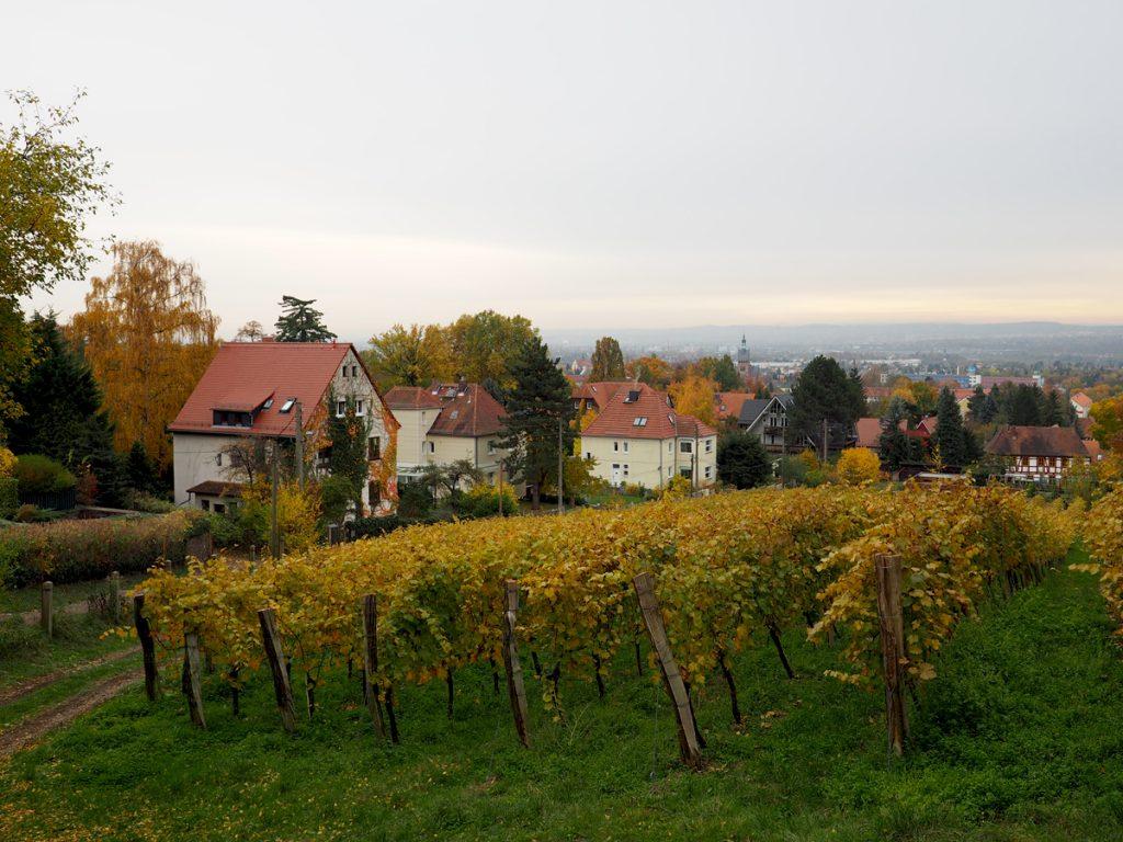 Radebeul Weinberge