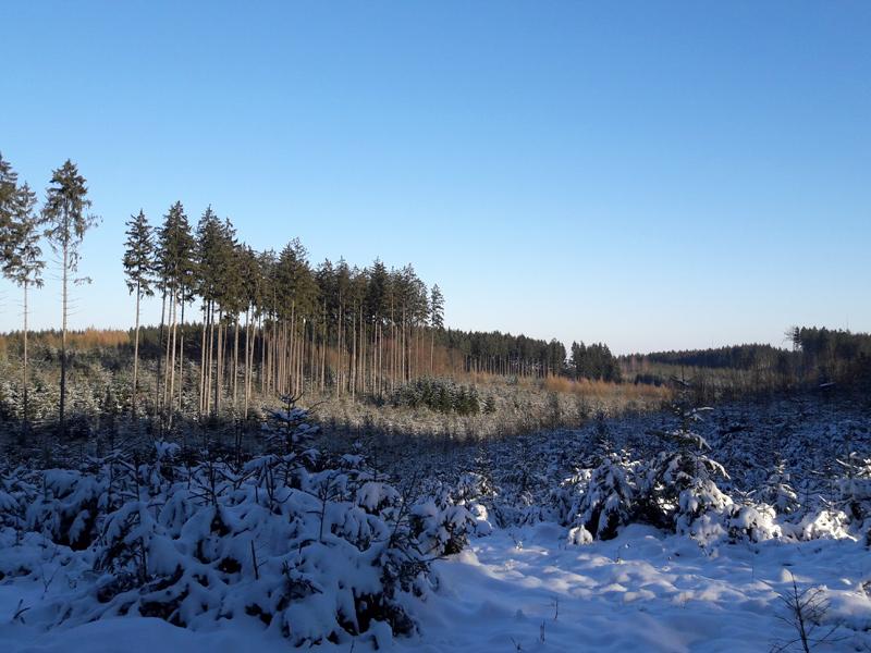 Langlaufen Dachau - Wald