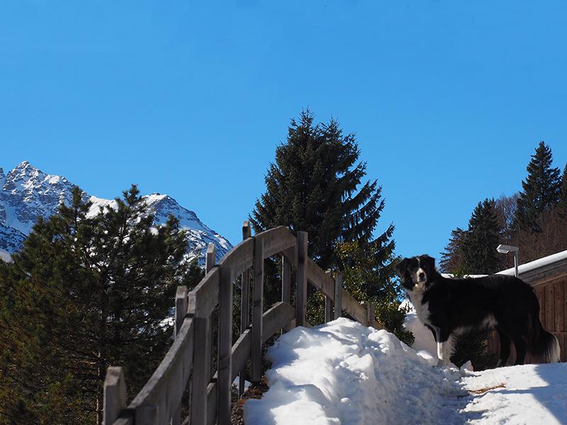Winterwandern Rauth - Krinnenspitze