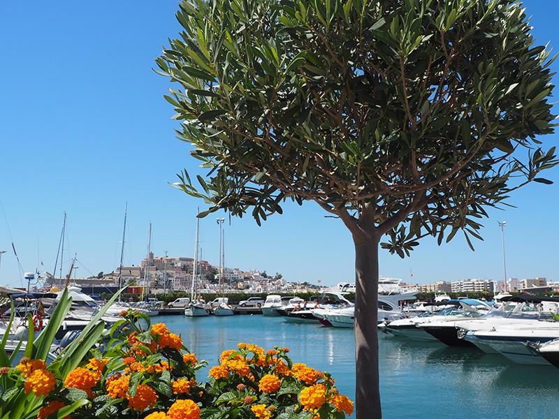 Ibiza-Stadt (Eivissa) - Yachthafen