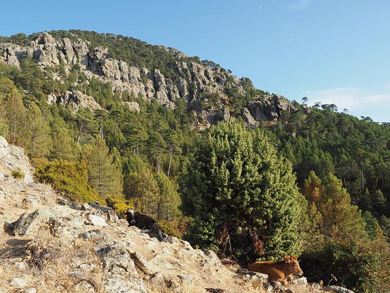 Wandern auf dem GR20 auf Korsika - von Calanzana zum Refuge d'Ortu di u Piobbu