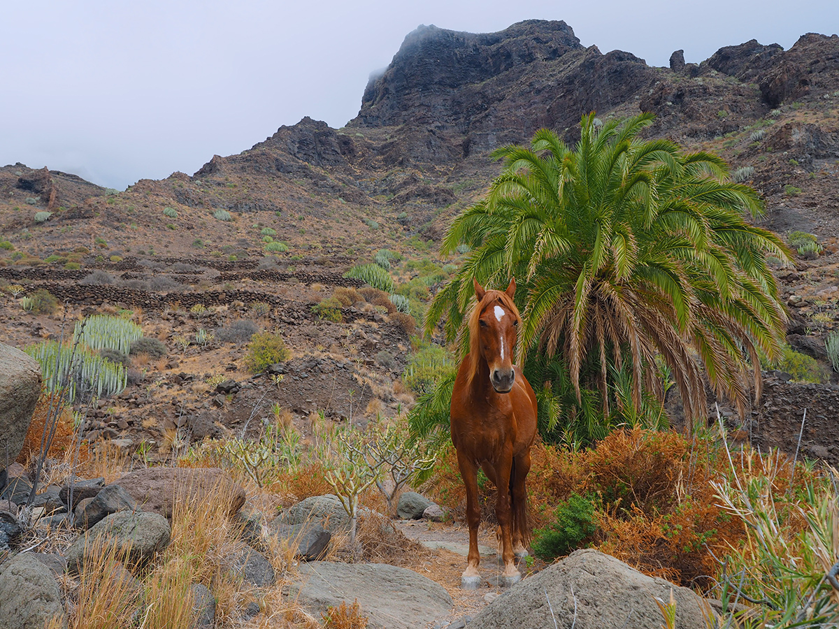 Wandern zum Guigui Strand - Gran Canaria