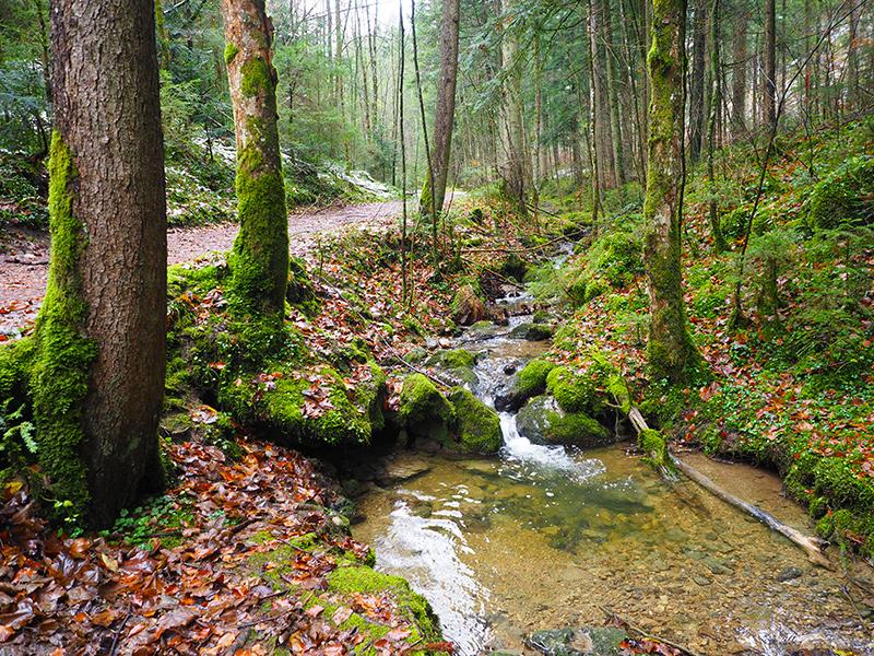 Winterwandern Breitenstein - Wald