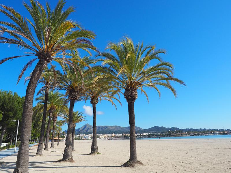 Mallorca - Alcudia, Palmen am Strand