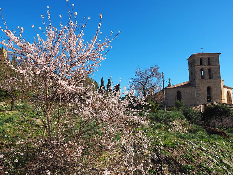 Mallorca - Mandelblüte in Arta