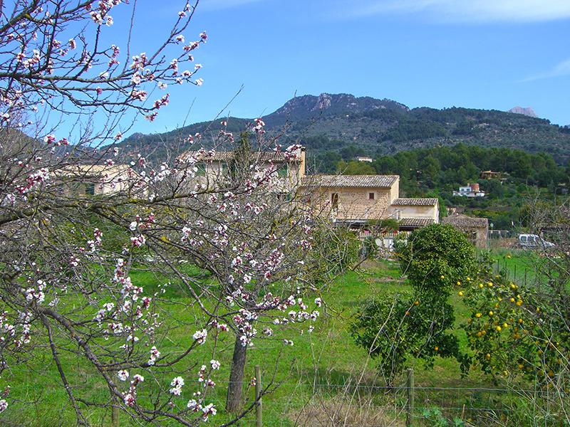 Mallorca - Mandelblüte in Soller