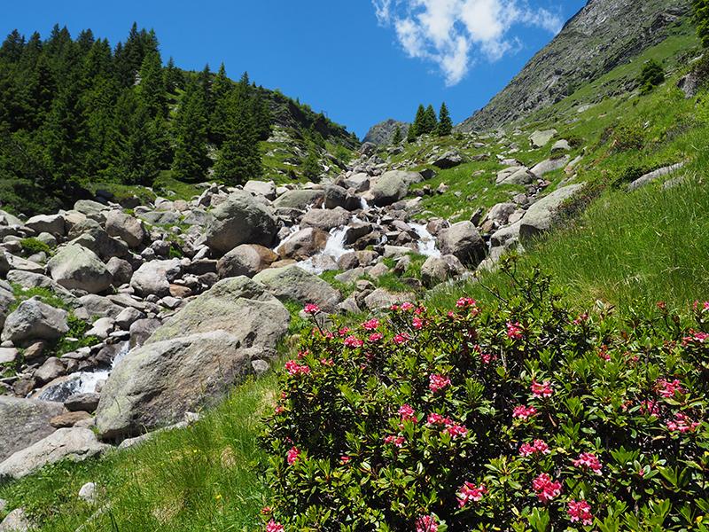 Spronser Seen Wandern - Alpenrosen