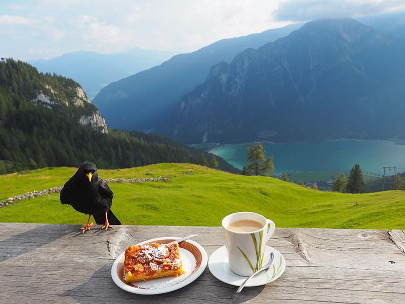Dalfaz Alm - Kaffee & Kuchen