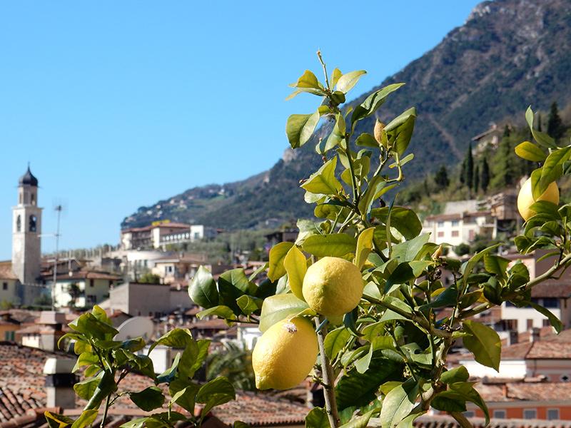 Gardsee - Limone sul Garda, Zitrone