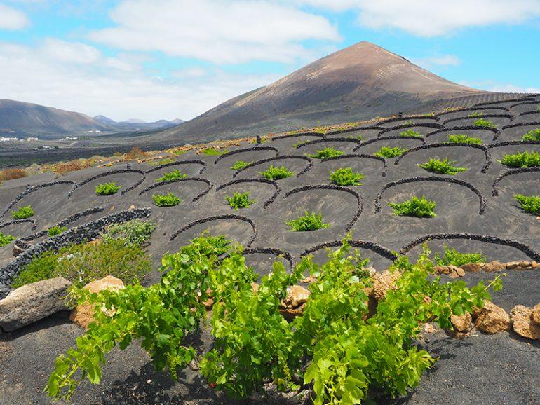 Lanzarote Wandern - Weingebiet La Geria