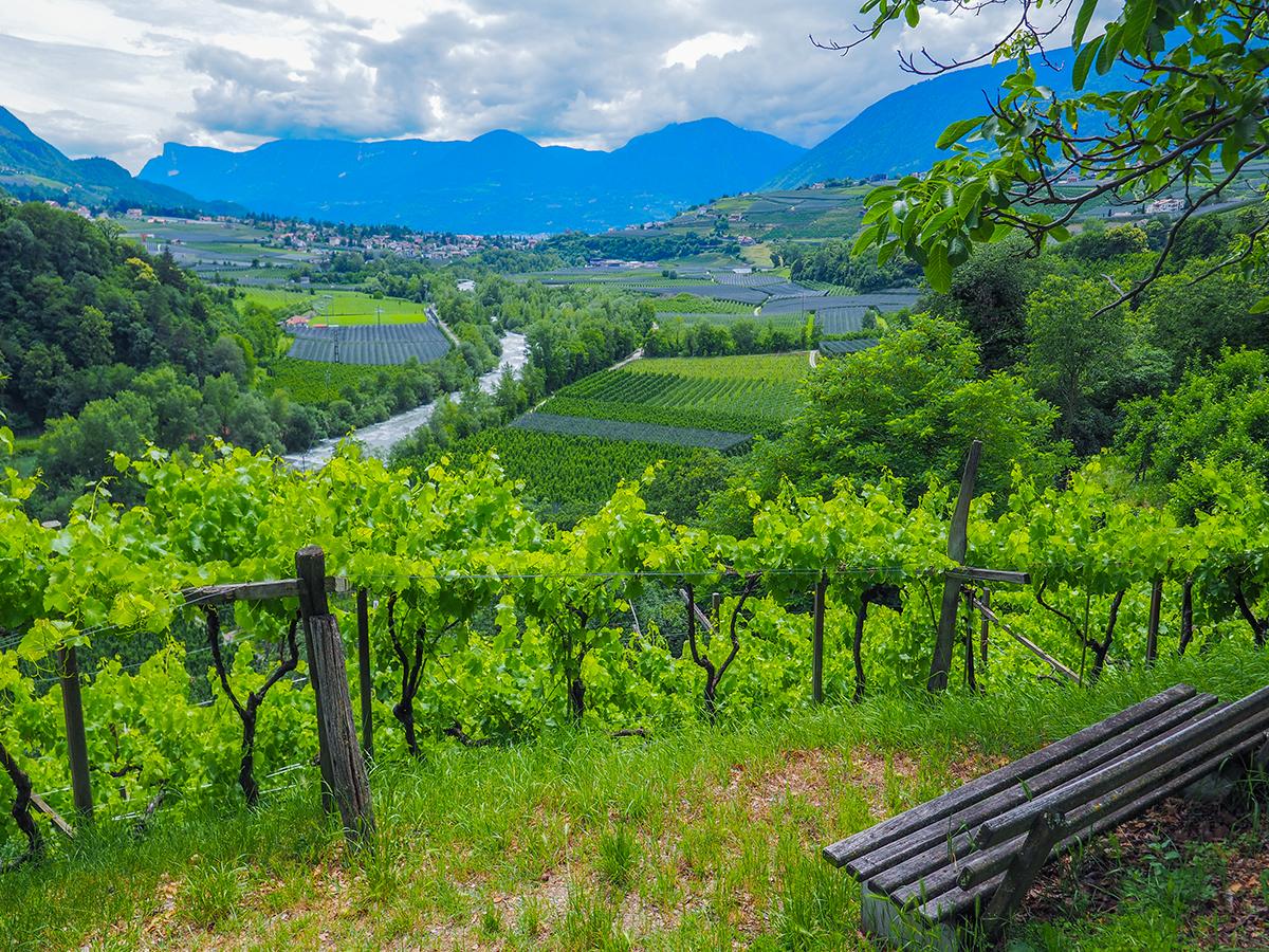 Passeiertal - Radfahren Dorf Tirol, Weinberge