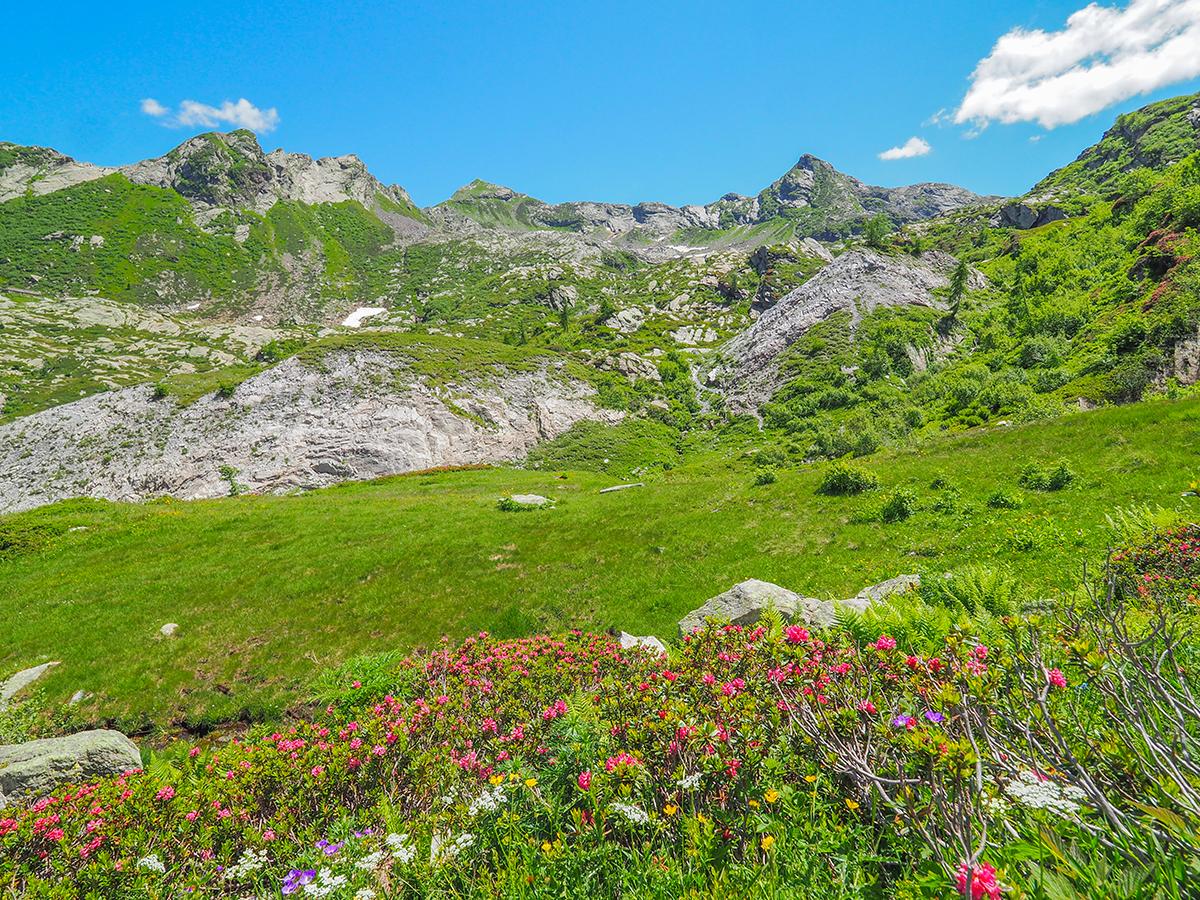 Wandern am Lago Maggiore, Cima della Laurasca, Alpenrosen