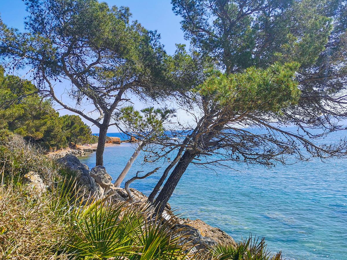 Mallorca Wandern - Alcanada - Platja des Coll Baix