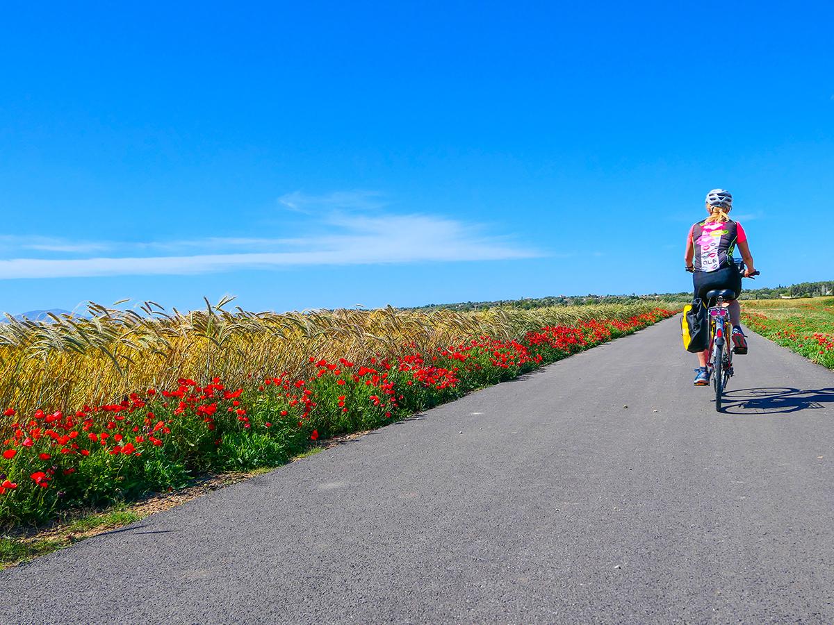 Mallorca Radreise - Maria de Salud, Mohn