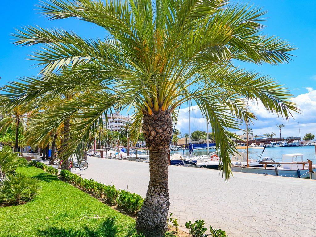 Mallorca Radreise - Port d'Alcudia, Hafen