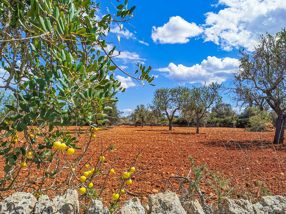 Mallorca Radreise - Landwirtschaft