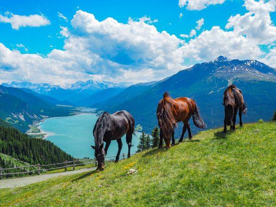 Wandern Reschensee - Plamort, Pferde
